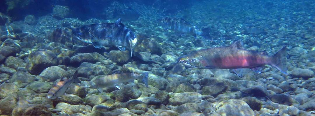 Homepage-Fish-4